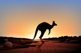 Fototapety A sunset with a kangaroo