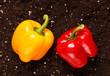 pepper on the soil