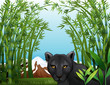 A black panther at the bamboo forest