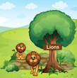 A signboard posted in a tree and the two lions