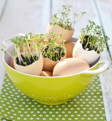 eggs and water cress