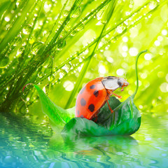 Little ladybug floating on the leaf.