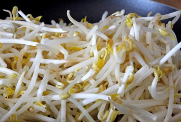 Fresh Organic Bean Sprouts