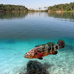 Tropical paradise and giant grouper