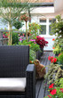 Modern terrace with a lot of flowers and funny cat