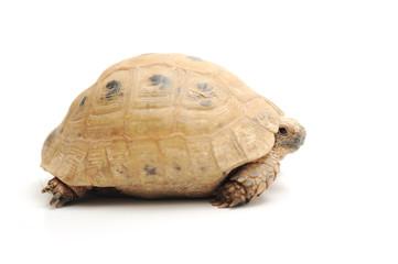 Turtle posing series