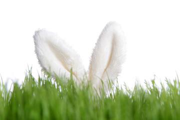 Hasenohren hinter grünem Gras