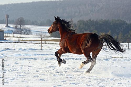 Fototapeten,pferd,tier,säugetier,landwirtschaft
