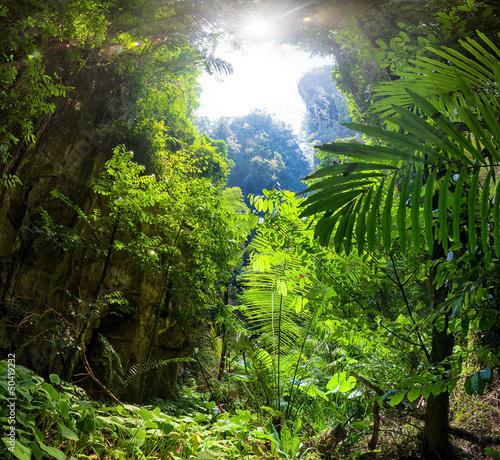 Keuken foto achterwand Bossen Jungle Forest
