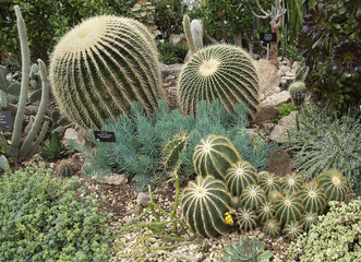 variety of beautiful cacti