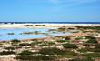 Sardegna, Sinis, area umida