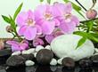 Fototapeten,cymbidium,orchid,backstein,steine