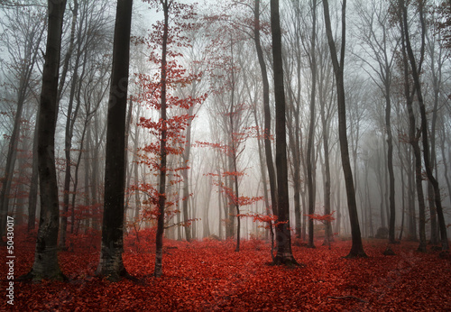 canvas print picture Foggy autumn day intot he forest