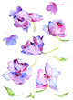 Quadro Watercolor spring flowers