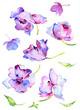 Quadro Watercolor spring flowers