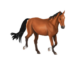 A beautiful horse isolated in white background