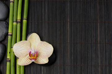 orchid and bamboo grove on bamboo stick straw mat