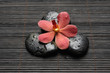 Close up red orchid and zen Stones on bamboo mat