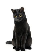 Mignon chat noir isolé sur fond blanc