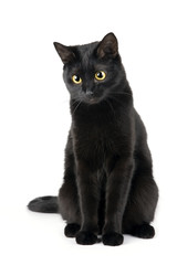 Cute black cat isolated on white