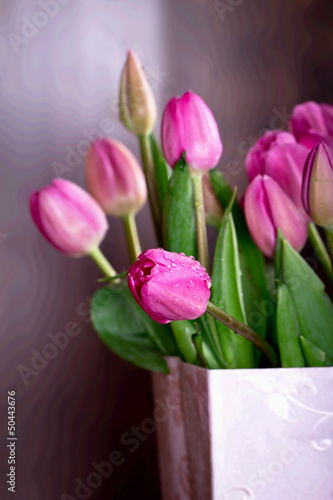 Pink tulips in a pink bag