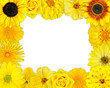Flower Frame with Yellow Flowers on Blank Background