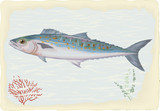 Mackerel on retro style background