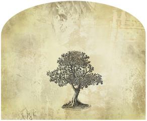 Old tree illustration