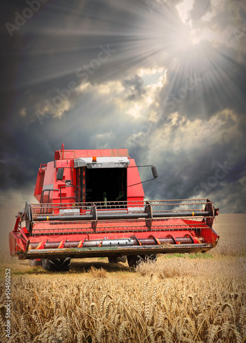 Combine harvesting wheat .