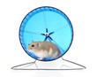 Dwarf Hamster in Exercise Wheel