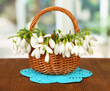Spring snowdrop flowers in wicker basket,on wooden table,
