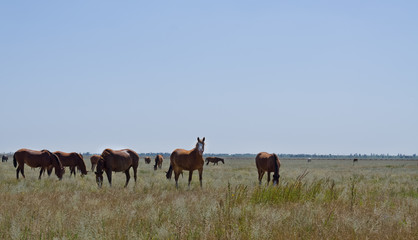 Herd of horses on grassland