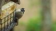 Birds Fighting Over Feeder