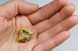 Nevada USA Gold / Quartz Nugget Held in Hand
