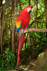 Macaw Parrot Perched in a Branch