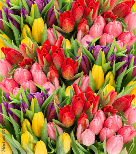 Fototapety, obrazy : fresh spring tulip flowers with water drops