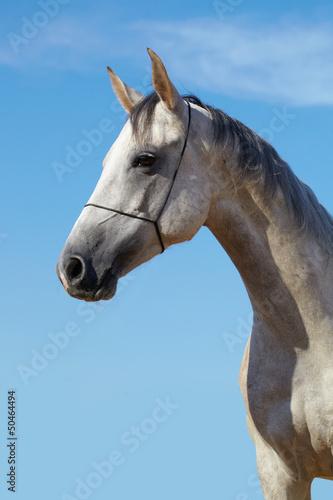 Horse portrait
