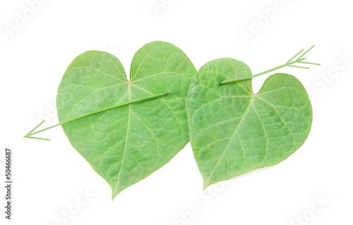 love concept: pair of hearts from leaves for happy valentine day