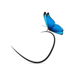 Papillon bleu et noir