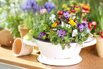 Frühlingsblumen Shabby Look