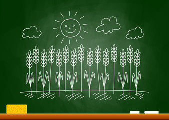 Drawing of wheat field on blackboard