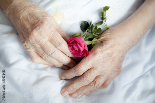 Hands of 92 years old lady holding beautiful rose-closeup