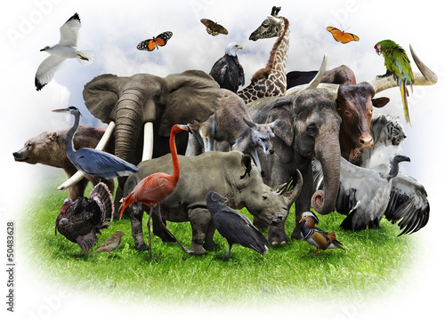 Aluminium Buffel Animals Collage