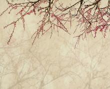 Fleur de prunier sur le vieux antique fond de papier vintage
