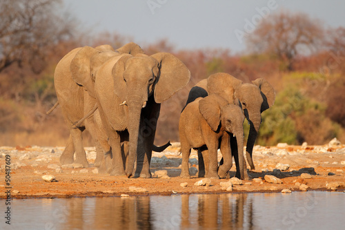 Elephants at waterhole, Etosha National Park