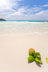 Kokosnuss am Seychellenstrand