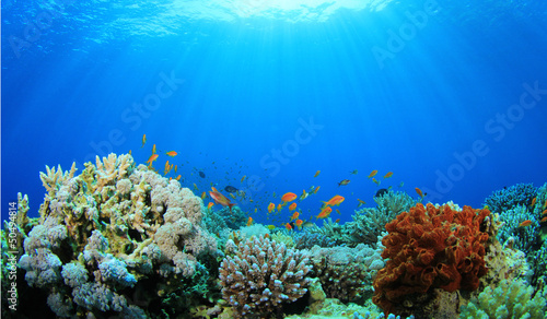 canvas print picture Coral Reef Underwater