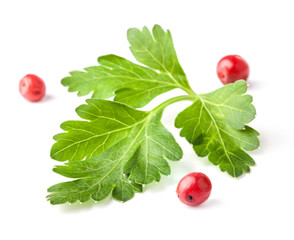 Parsley leaves with red peppercorn isolated on white, closeup