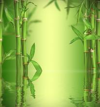 Spa encore la vie avec des pousses de bambou, de l'espace libre pour le texte