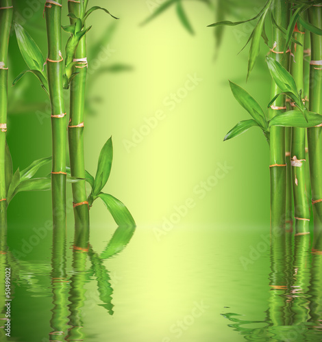 Spa still life with bamboo sprouts, free space for text